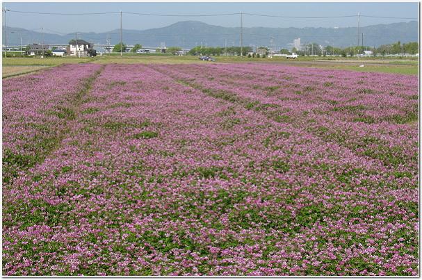 琵琶湖の畔で稲作された滋賀県産お米