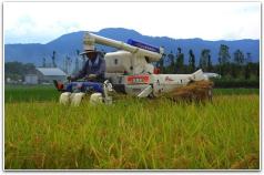 稲刈り作業風景